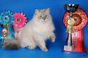 Невский маскарадный кот фото
